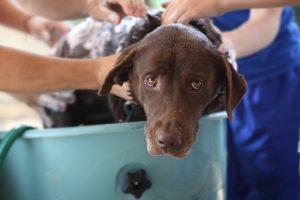myti psa destovou vodou